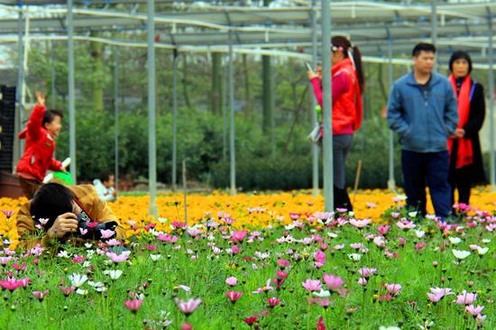 万顷园艺世界:醉蝶飞舞,春花灿烂