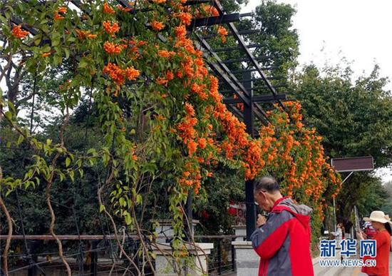 广东:赏花看灯闹民俗 花样方式庆新春