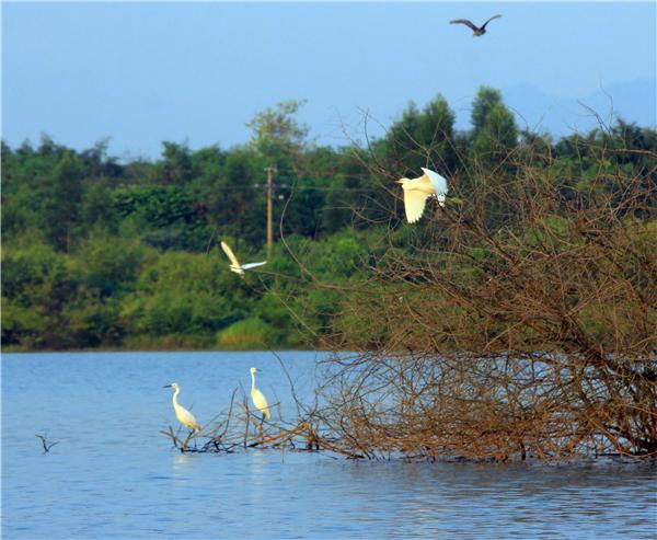 广东英德宝晶宫有一个鹭鸟岛,栖息着上千只白