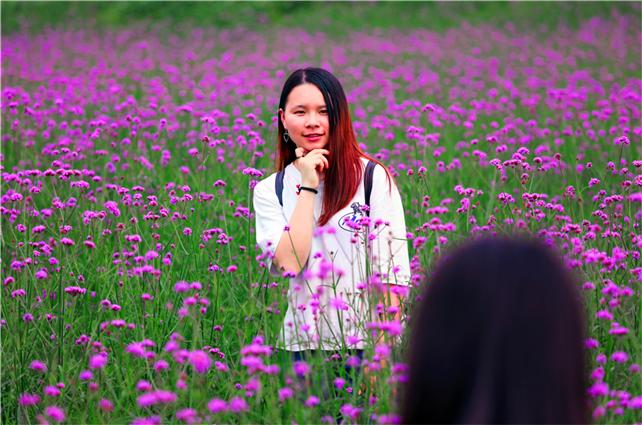 广东现踏青赏花热潮,佛山生态园的马鞭草让游