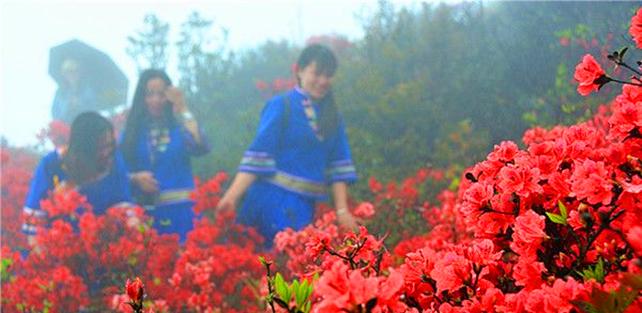 春雨浇出美春色,映山红遍金子山,五一假期粤北出现旅游高峰