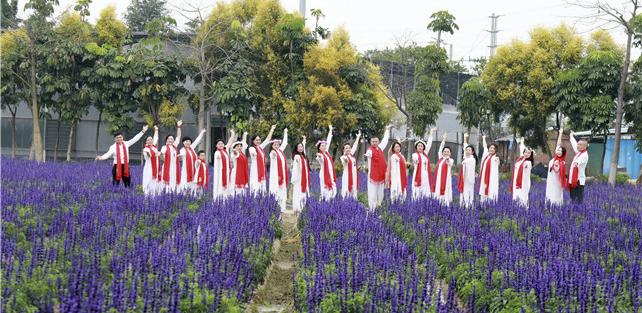 广州花都香草世界鲁冰花海盛放,春花红胜火,踏春正当时