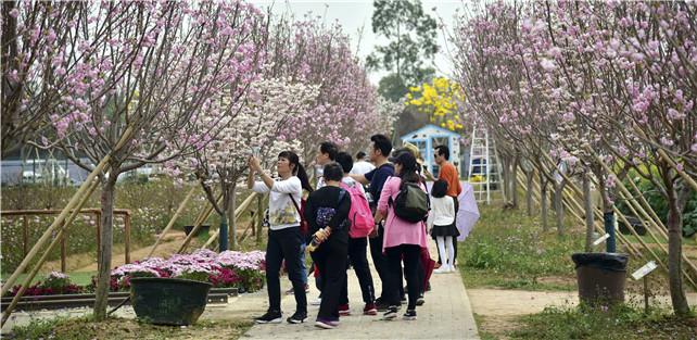 广东人都知道华农花色美,却不知道佛山盈香生态园春花赛华农