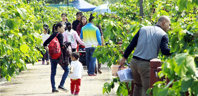 南海西樵渔耕粤韵文化园第五届桑果节即将开始,还可以赏花捕鱼