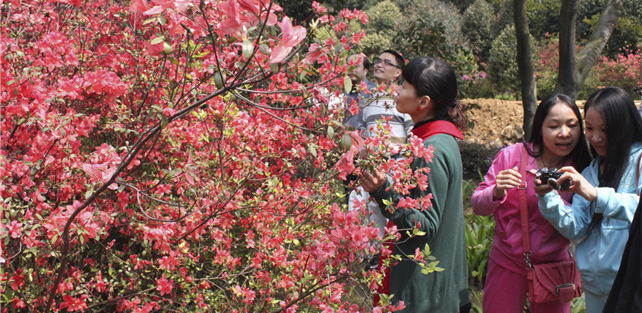 家花哪有野花香,春天去南丹山赏一山山花