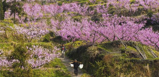 阳春三月天,到广东连山金子山赏山花挖春笋吃春宴