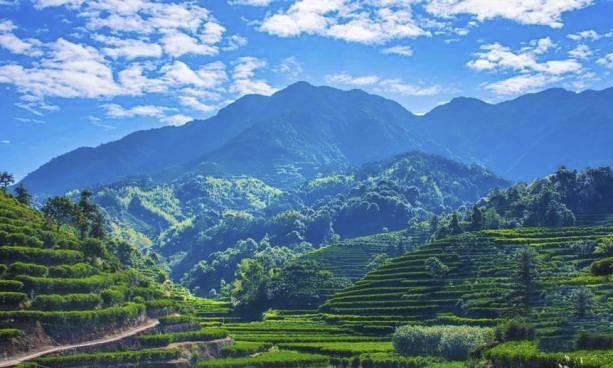 """广东唯一入选!潮州凤凰古茶树茶园被评为""""中国美丽茶园"""""""